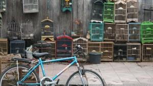 Ngasem bird market
