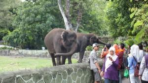 Gajah Gembiraloka Jogja